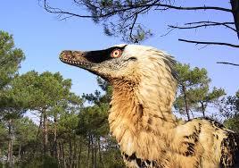 Homer V. Raptor