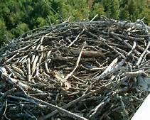 nest empty)