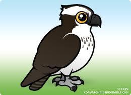 cartoon osprey