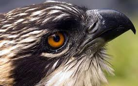 osprey 6