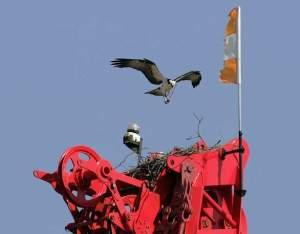 crane delay