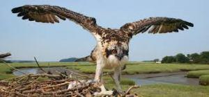 fledge(1)
