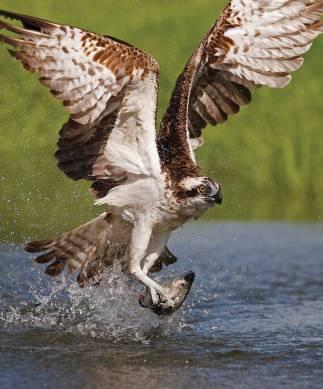 Harriett fishing