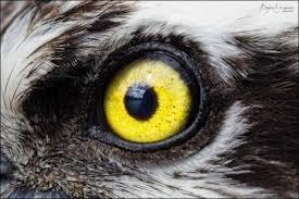 Yewwow eye)