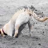 digging(1)