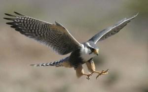 falcon+09_pic+04