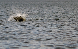 Hittig the water