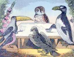 birds play cards