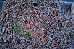 3 eggs 5-1-2015