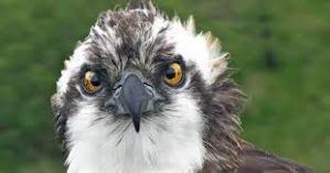 angry OO