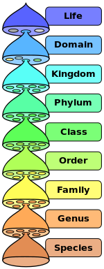 Biological_classification.png