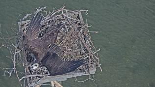 Nesting 03 30 19