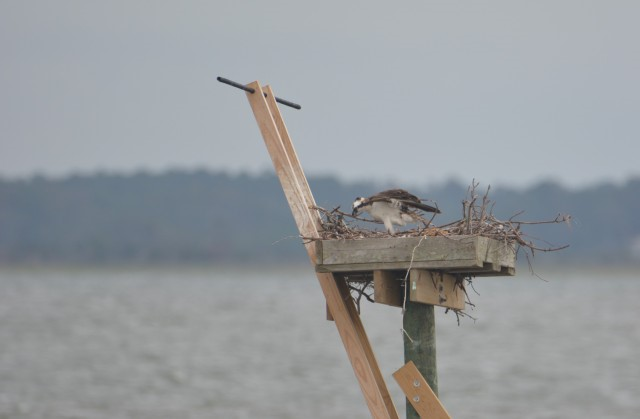 nest repairs.jpg