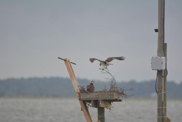 Nest repairs1.jpg