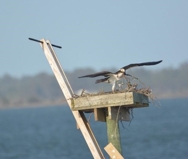 nest repairs11 (2).jpg