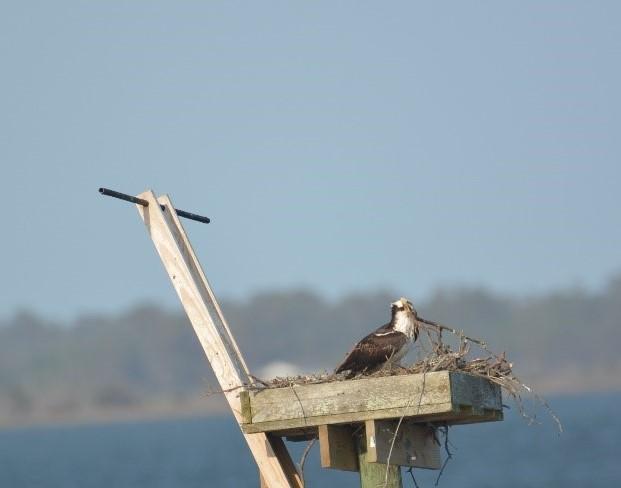 nest repairs2 (2).jpg